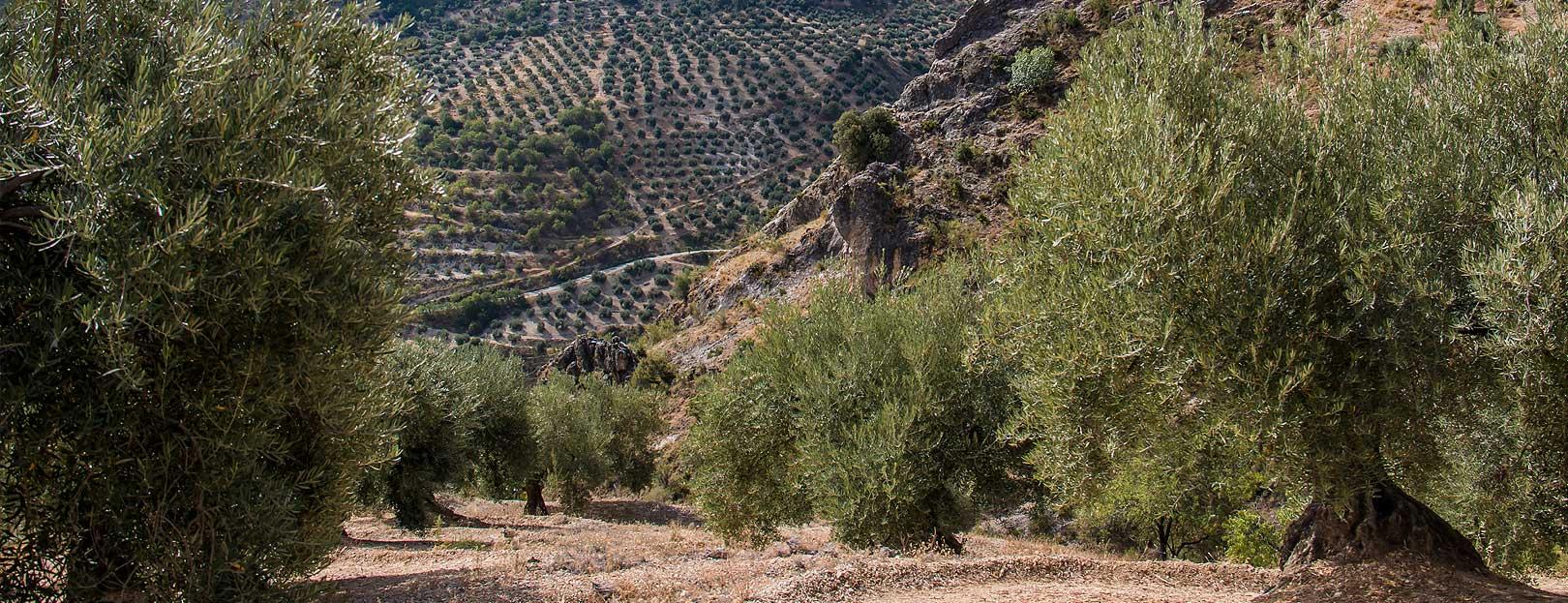 sierra-magina-olivares